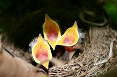 food-birds